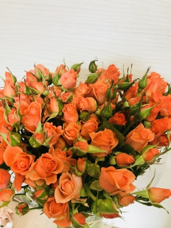 Роза Россия кустовая(Спрей)